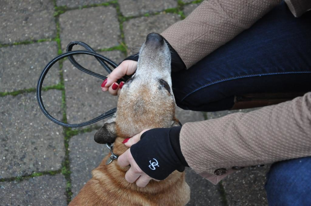 Dog Walking Wrist Warmers and Gloves